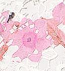 Pink(A05633)